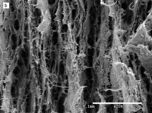 nanopaper.jpg
