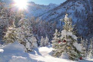 Verschneite Gebirgslandschaft mit Tannenwald