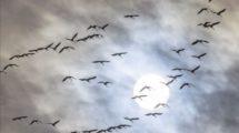 Vogelformation am Abendhimmel