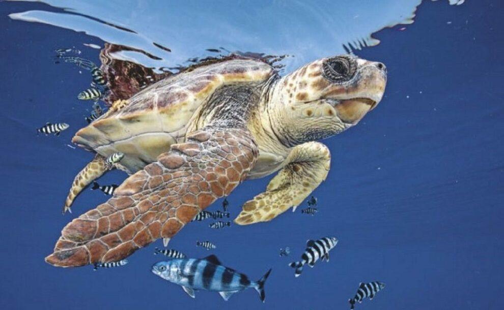 Symbolbild Meeresschildkröte