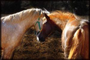 pferde01.jpg