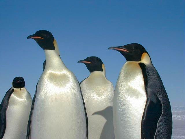 pinguin01.jpg