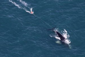 rightwhale_img_0146_750_282214.jpg