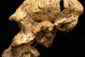 skull01.jpg