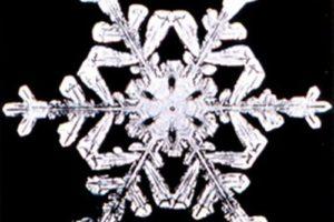 snowflake_wilson_bentley.jpg