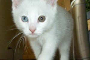 two_eyes_cat.jpg