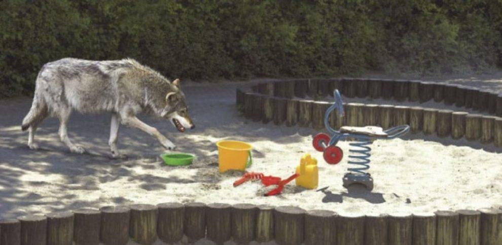 Wolf auf Kinderspielplatz