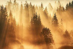 Sonnenbeschienener Wald